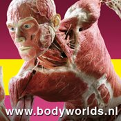 Meivakantie tip: BODY WORLDS & The Story of the Heart